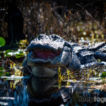 Stephen C Foster State Park & Suwannee River Eco-Lodge